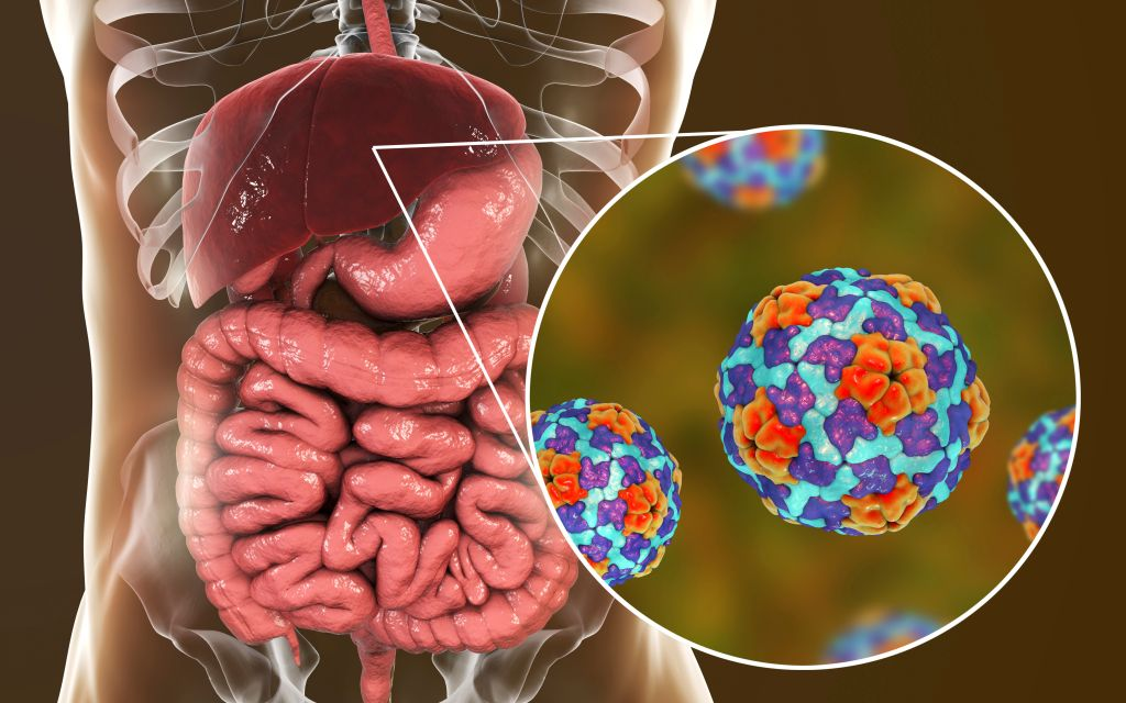 Hepatitis A infection, illustration