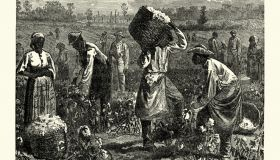 Scene on a cotton plantation, Southern USA, 19th Century