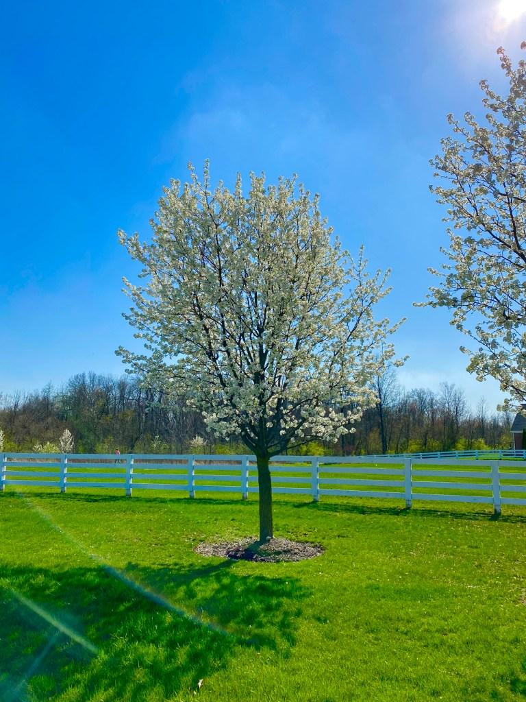 Spring in Ohio