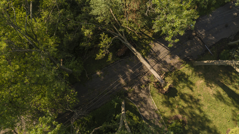 A tree has fallen because of the strong wind and it barricaded the street and destroyed power lines and internet and TV cables in a small town in New Jersey after a storm.